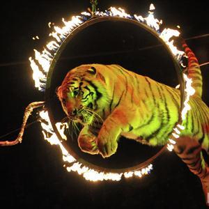 Цирки Видного