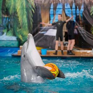 Дельфинарии, океанариумы Видного