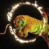 Цирки в Видном