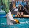 Дельфинарии, океанариумы в Видном