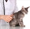 Ветеринарные клиники в Видном